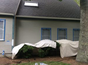 Protect Plants for Exterior Painting Residential